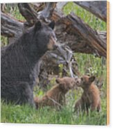 Mama Black Bear With Cinnamon Cubs Wood Print