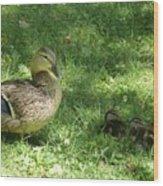Mama Duck Wood Print