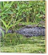 Mama Gator With Babies Wood Print