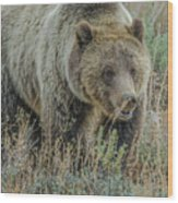 Mama Grizzly Blondie Wood Print