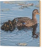 Mama Mallard And Her Ducklings Wood Print