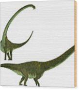 Mamenchisaurus Hochuanensis Wood Print