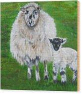 Mamma And Baby Sheep Of Ireland Wood Print