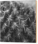 Mammillaria Wood Print