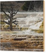 Mammoth Hot Springs Beauty Wood Print