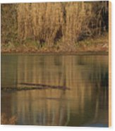 Mammoth Spring Arkansas Wood Print by Douglas Barnett