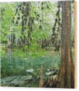 Manatee Beauty Wood Print