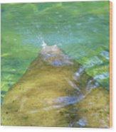 Manatee Exhale Wood Print
