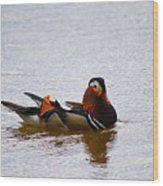 Mandarin Duck 20130507_104 Wood Print