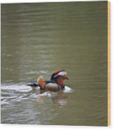 Mandarin Duck 20130507_41 Wood Print