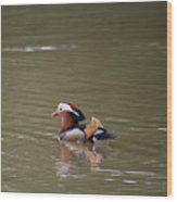 Mandarin Duck 20130507_46 Wood Print