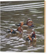 Mandarin Duck 20130507_93 Wood Print