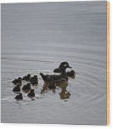 Mandarin Duck And Babes 20130508_227 Wood Print