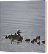 Mandarin Duck And Babes 20130508_230 Wood Print