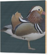 Mandarin Duck II Wood Print