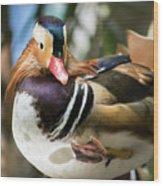 Mandarin Duck Raising One Foot. Wood Print