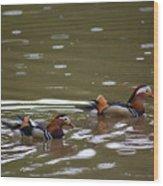 Mandarin Ducks 20130507_96 Wood Print