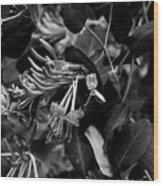 Mandarin Honeysuckle Vine 2 Black And White Wood Print