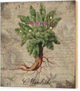 Mandrake Vintage Elements Botanicals Collection Wood Print