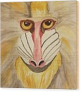 Mandrill Monkey Wood Print