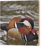 Mandrin Duck Posing Wood Print