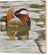 Mandrin Duck Strutting Wood Print