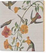 Mango Humming Bird Wood Print