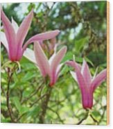 Mangolia Tree Flowers Art Prints Pink Magnolias Baslee Troutman Wood Print