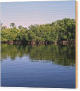 Mangrove Forest Wood Print