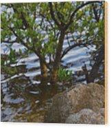 Mangroves And Coquina Wood Print