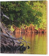 Mangroves Of Roatan Wood Print