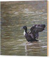 Manky Mallard 20130508_336 Wood Print