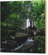 Manoa Falls Stream Wood Print