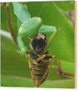 Mantis Munchies Wood Print