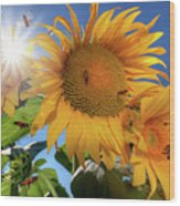 Many Bees Flying Around Sunflowers Wood Print
