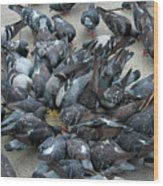 Many Doves At Piazza San Marco Venice Wood Print