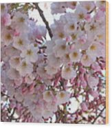 Many Pink Blossoms Wood Print