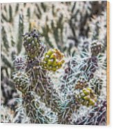 Many Stems Of Poky Small Cactus In Desert Wood Print
