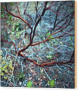 Manzanita Abstract Wood Print