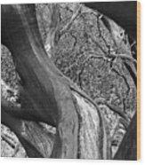 Manzanita Black And White Wood Print