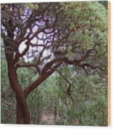 Manzanita Tree By The Road Wood Print