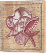 Map And Shells Wood Print