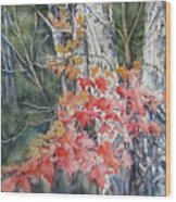 Maple And Birch -new England  Fall Wood Print