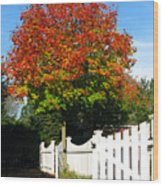 Maple And Picket Fence Wood Print by Olivier Le Queinec