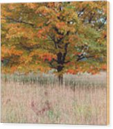 Maple And Tall Grass Wood Print