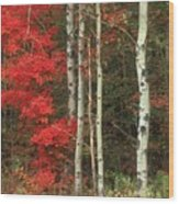 Maple And The Birch Wood Print