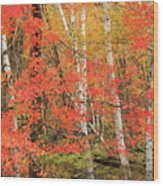 Maple Birch Forest In Autumn Wood Print
