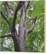 Maple Branches Wood Print