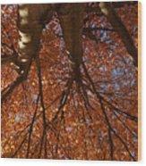 Maple Dreaming Wood Print