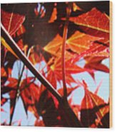 Maple Fire Wood Print